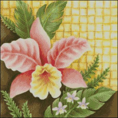 Розовая орхидея - А
