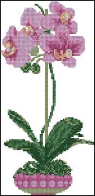 Орхидеи схема вышивки скачать