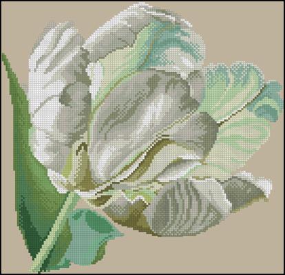 White Tulip вышивка схема бесплатно