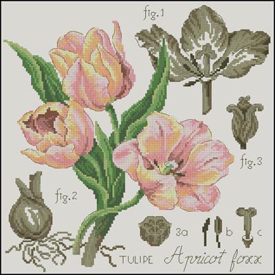 Etude a la Tulipe Aprikot Foxx схема вышивки крестом