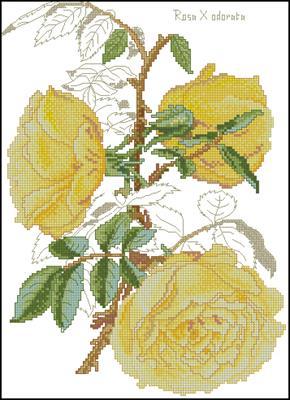 Желтые розы схема вышивки крестиком