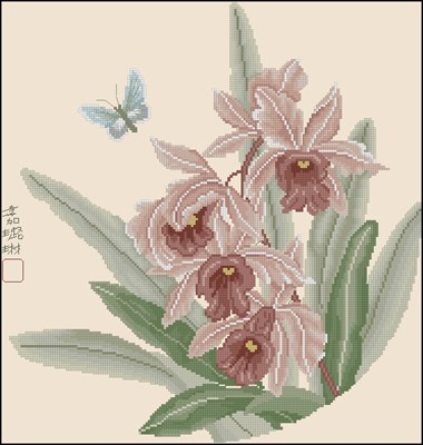 Ming Orchids