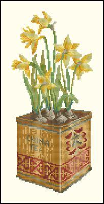 Нарцисс в банке