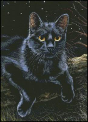Ночь и черная кошка