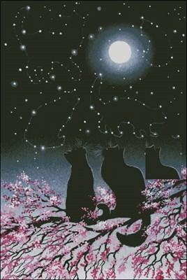 Созвездия кошек