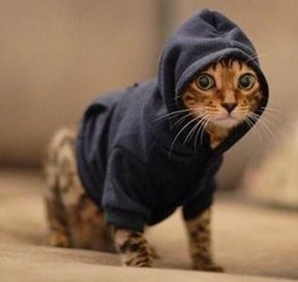 комбинезон для кошки